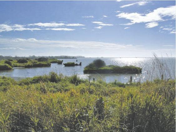 Photo of Wainono Lagoon.